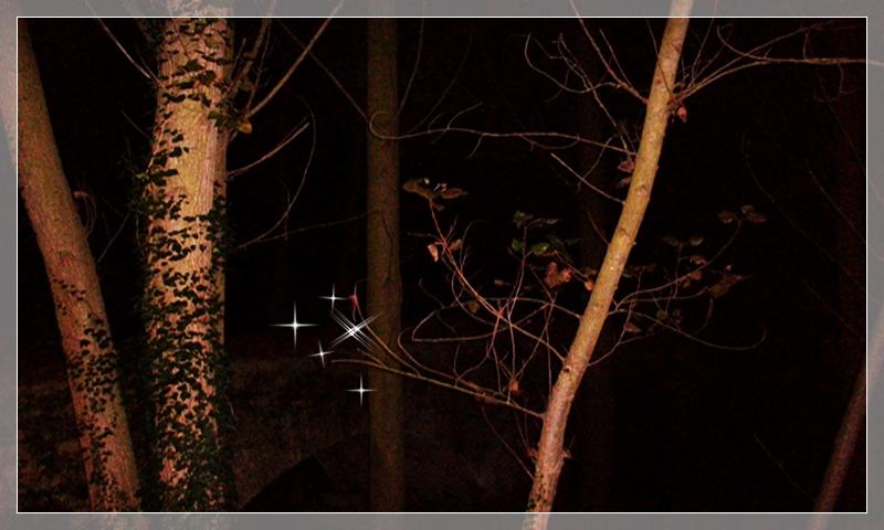 bosque en la Garrotxa